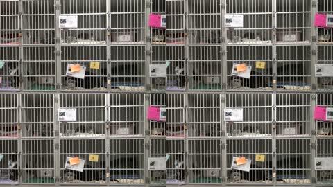 笼子里的流浪猫领养爱心公益