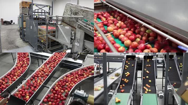 苹果清洗包装设备流水线作业工厂水果加工厂