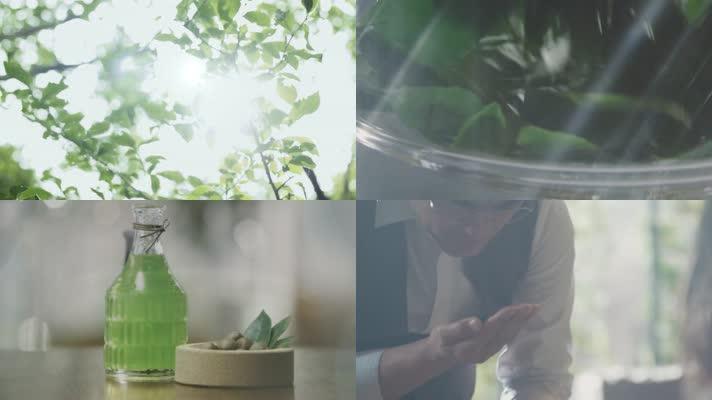 茶叶提炼精华萃取研究茶园茶树茶叶