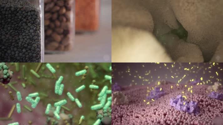 细菌病毒霉菌肿瘤癌症细胞消化系统医学动画