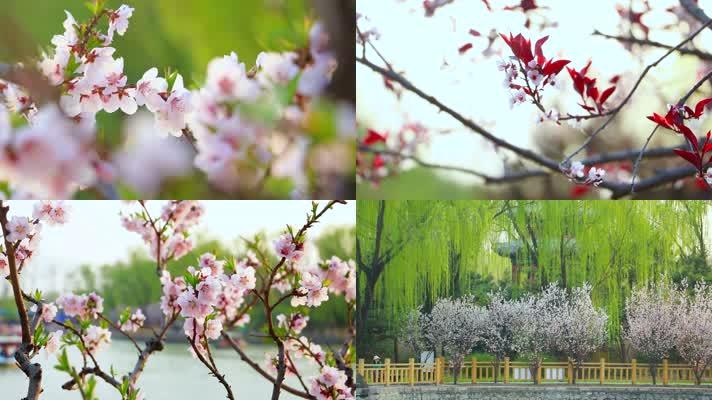 【原创】春天花卉鲜花