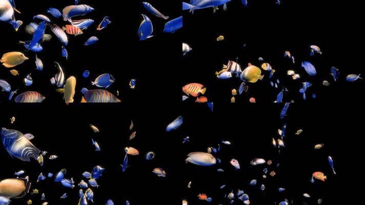 带透明通道海底世界观赏鱼