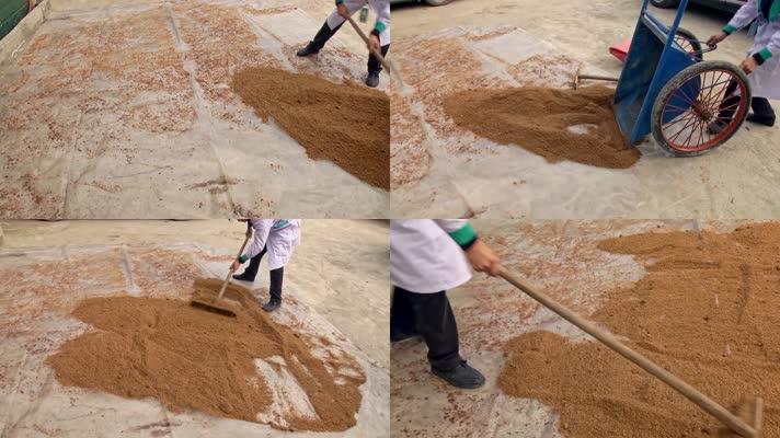 打小工发酵酵池锯木粉晾晒搅拌258
