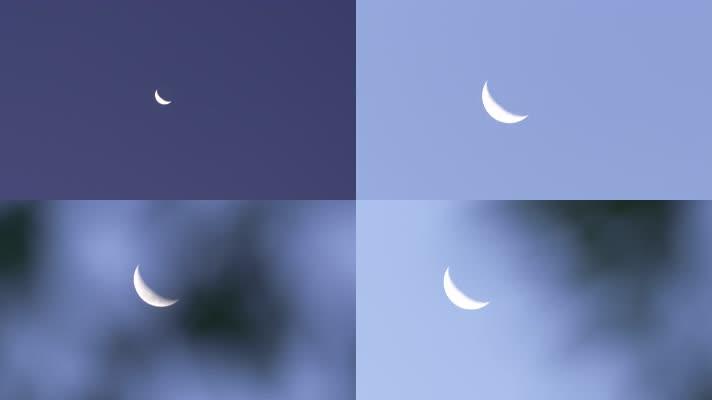 牵牛花和月亮