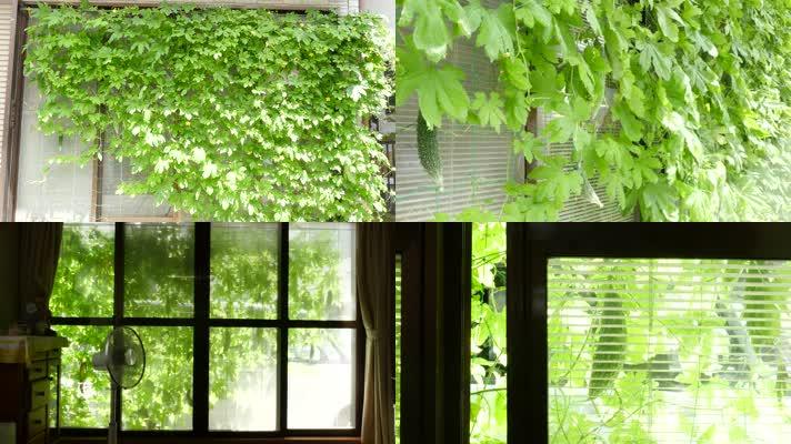 爬藤植物,田园院子,文艺小清新