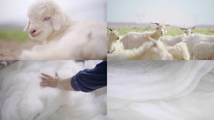 羊绒羊毛绒毛毛纺内蒙原绒,4K震撼宣传