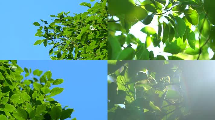 通透阳光树叶自然空镜头