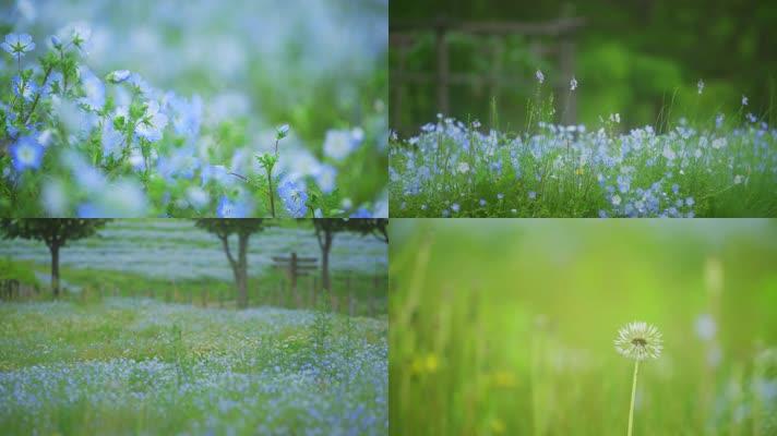 唯美树木花草花儿花朵小清新写意空镜