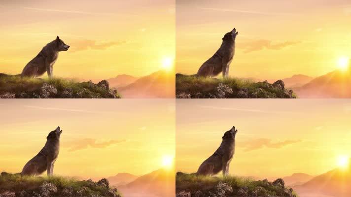 孤狼狼王嚎叫