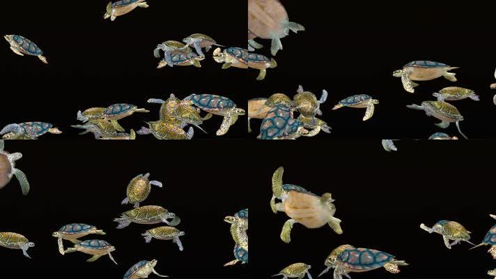 全息海龟群