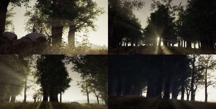 【4K】阳光森林