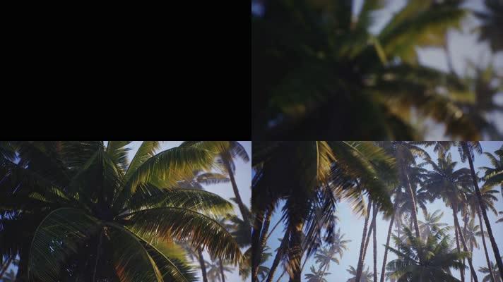 【4K】椰树林