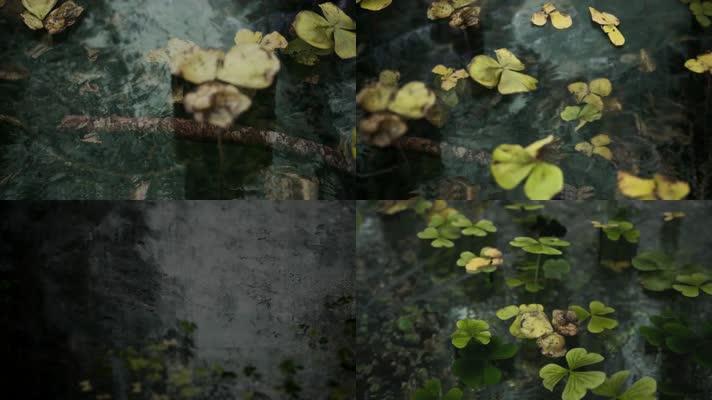 【4K】水中落叶