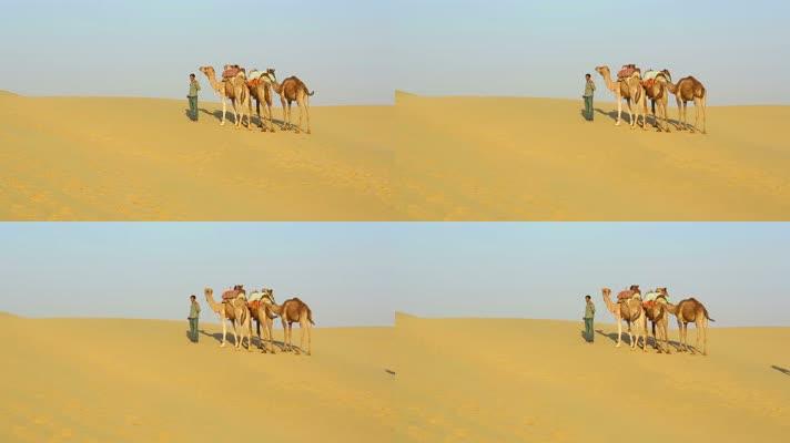 贝都因人与他的骆驼站在沙漠中